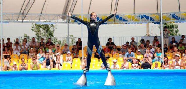 Дельфинарий немо